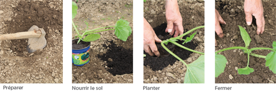 Planter les courgettes - Comment planter des poivrons ...