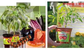 vente en ligne plants potagers